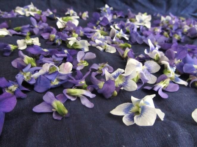 violets for Roman violatium